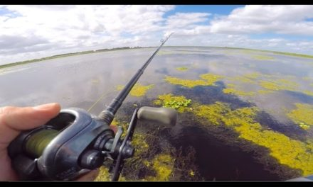 Fishing In THICC Florida Grass
