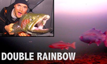 Uncut Angling – Manitoba – Hectic Rainbow Trout Double – Barbe Lake, Manitoba