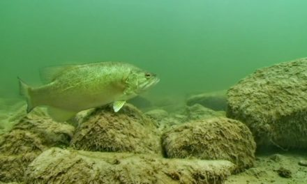 How Water Clarity Can Impact Your Day of Fishing
