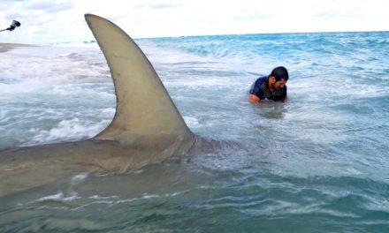 Monster Sharks caught Fishing from the Beach – 4K