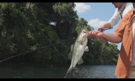 No Bull…This Minnow Kicks Bass