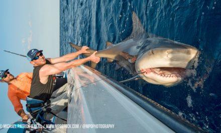 BlacktipH – Shark Fishing with New York Mets Pitchers Steven Matz & Sean Gilmartin