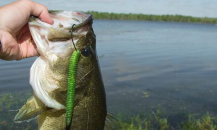 LakeForkGuy – Spring Bank Fishing Tips for Spawning Bass