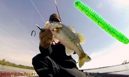 – Spring Bass Fishing Tip for Stubborn Fish