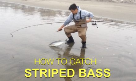 – TIPS ON HOW TO CATCH STRIPED BASS – Surf Fishing