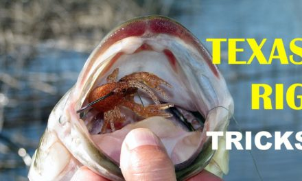 – Texas Rig Tips and Tricks – How To | Bass Fishing