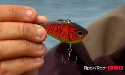 New Colors for the Rapala® Rippin Rap