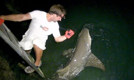 BlacktipH – Bahamas Lemon Shark from the Dock