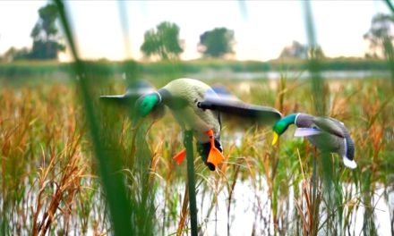 Flair – Duck Hunting Opening Day 2016