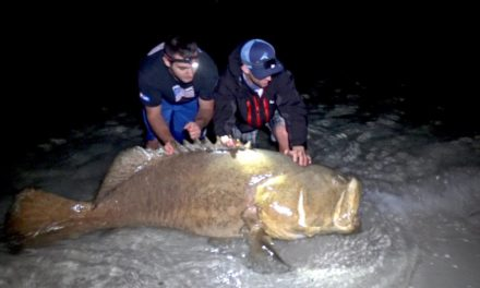 BlacktipH – Fishing for Giant Goliath Grouper from the Beach – 4K