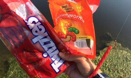 Gummy Worm vs. Senko Fish-Off!!!
