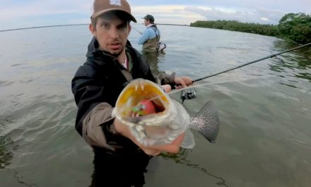 BlacktipH – Wade Fishing for Speckled Trout in the Indian River Lagoon