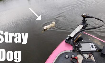 We SAVED this Dog's Life!!! Strangest Bass Fishing Tournament Ever? (ft. LunkersTV, Jon B. & AP)