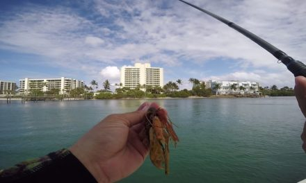 Lawson Lindsey – Clearwater Jig Flippin in Saltwater