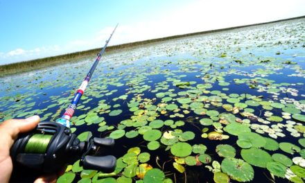 Flair – Fishing for GIANT Swamp Bass