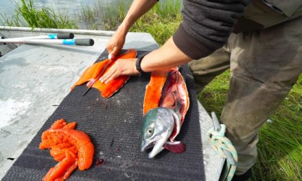 Lunkers TV – Remote Salmon Fishing in Alaska – Catch and Cook