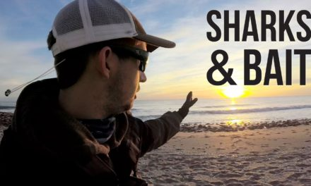 BlacktipH – Surf Fishing for Sharks and Bait
