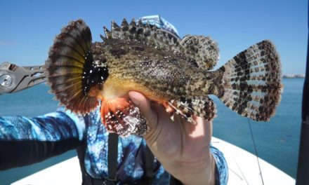 Lawson Lindsey – VENOMOUS Fish Caught, Can You Help me Identify It?