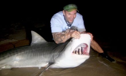 BlacktipH – A Tiger Shark Tale