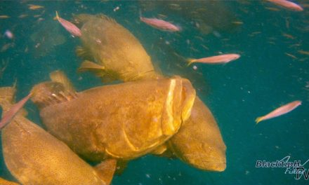 BlacktipH – Awesome Goliath Grouper Fishing Video