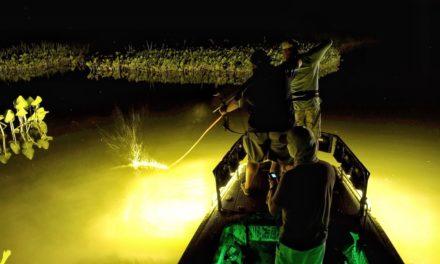 Scott Martin VLOG – Bow Fishing in Washington D.C. – Snakeheads, Carp and Catfish Potomac River
