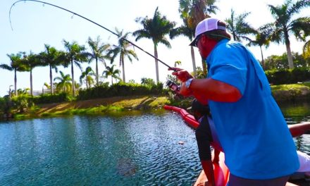 Lunkers TV – Fishing for GIANT Peacock Bass in Miami