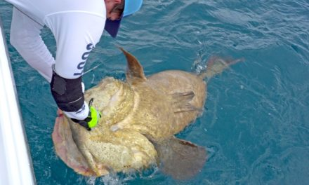 BlacktipH – Fishing for Goliath Groupers with the Fish Bums