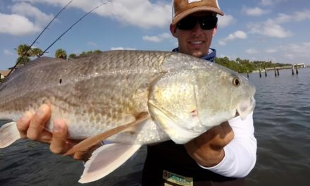 BlacktipH – Wade Fishing for Redfish, Trout and Snook in the Indian River