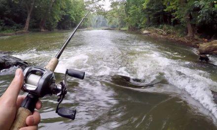 AMAZING Creek Fishing for Smallmouth Bass!!!