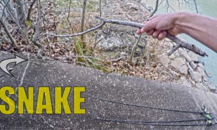 LakeForkGuy – Bank Fishing with SNAKES!