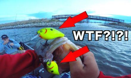 Flair – CRAZIEST Fish Catch EVER!!!!