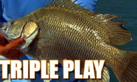 Deep Sea Fishing – The Tastiest Fish in the Ocean Tripletail Fish