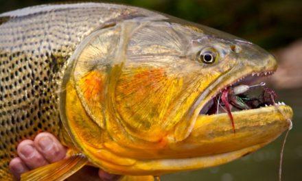 "Dan Decible – ""Devil's Gold"" – Fly Fishing for Golden Dorado in Bolivia"