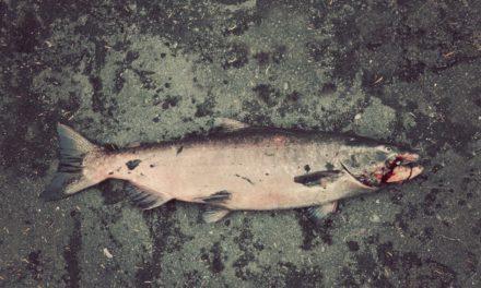 Dan Decible – Fishing Up North