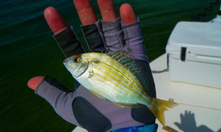 Lawson Lindsey – Fishing with Live Pinfish