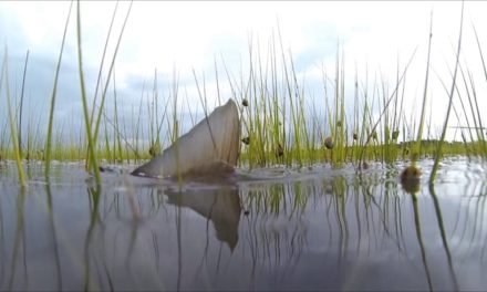 Dan Decible – Florida Flood Fly Fishing