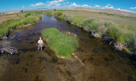 HATCH – BIG SKY PMDs – Montana Fly Fishing by Todd Moen