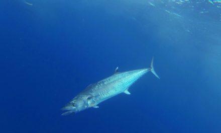 Addictive Fishing | Key West Deep Sea Fishing for Tuna, Kingfish and Grouper