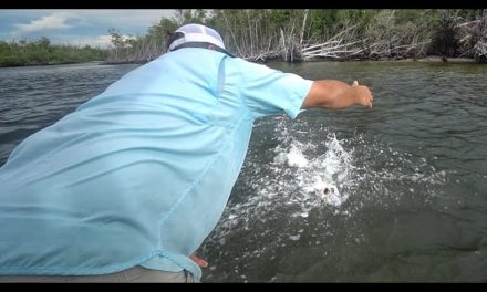 Scott Martin VLOG – Never Done Before – Bass, Snook, and Giant Sharks Fishing Challenge! Pt.3