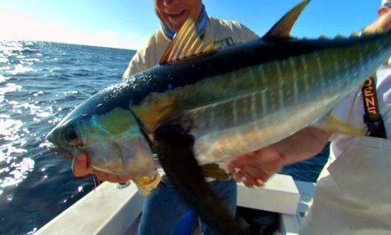 Addictive Fishing   Offshore Fishing Yellowfin Tuna on DOA Lures in Venice Louisiana
