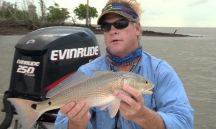 Redfish DOA Deadly Combo Fishing Popping Corks in the Everglades