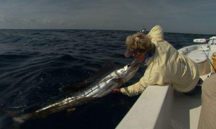 Sailfish Fishing for Florida Billfish on Light Tackle in the Atlantic Ocean
