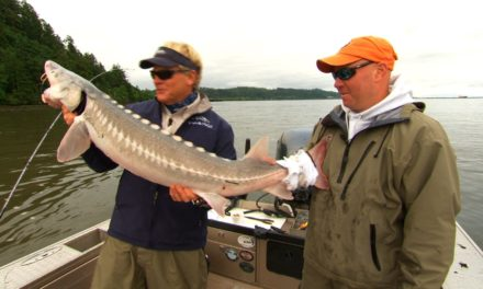 Sturgeon Fishing Astoria Oregon on the Columbia River