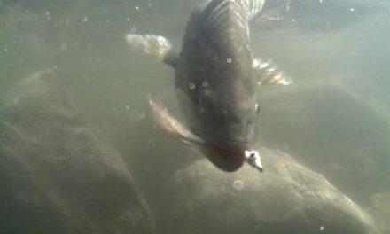 Dan Decible – Surf & Inshore Fishing 2009 – Part 1