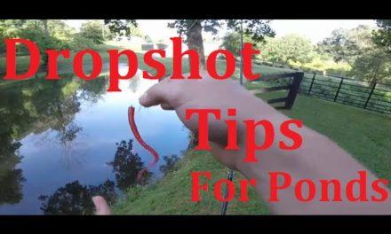 Dropshot Pond Fishing + Dropshot Tips!