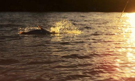 Dan Decible – Estrada Art Films: GladesDays – Fly Fishing in the Everglades