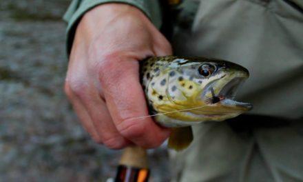 Dan Decible – FLY FISHING