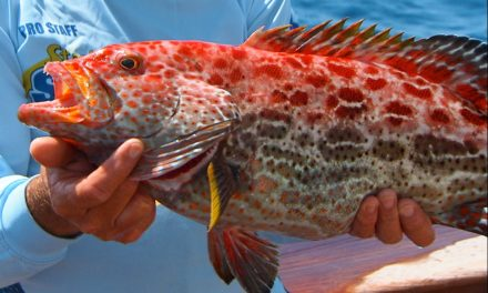 Addictive Fishing | Craziest Fish We've Ever Caught on TV – Yellowfin Grouper Fishing