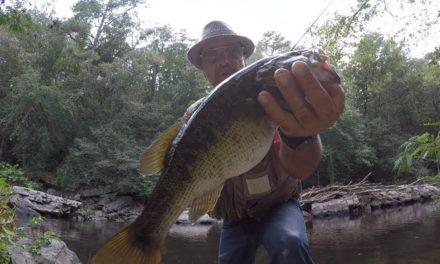 Creek Bass Fishing With Creek Chubs
