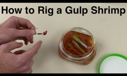 Salt Strong | – Easiest Way to Rig a Berkley GULP Shrimp for Saltwater Fishing